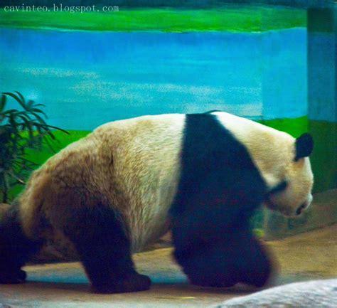 panda house entree kibbles giant panda house 大貓熊館 taipei zoo taiwan