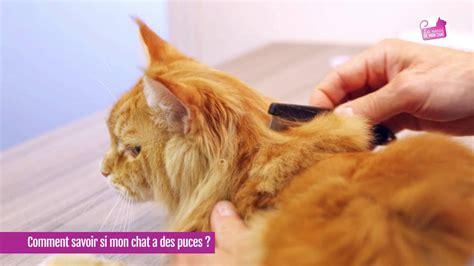 Puces De Chats by Mon Chat A T Il Des Puces