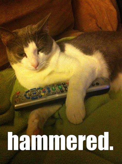Drunk Cat Meme - drunk cat meme laugh pinterest
