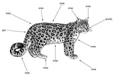 jaguar cycle diagram jaguar animal cycle diagram html imageresizertool