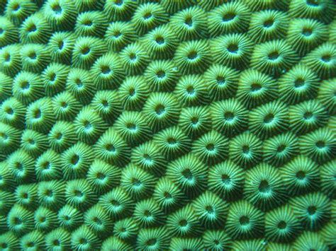 imagenes visuales tactiles coral textures i photo