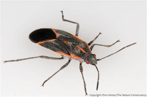 Exterminate Kitchen Bugs How To Get Rid Of Tiny Black Bugs In Kitchen How To Get