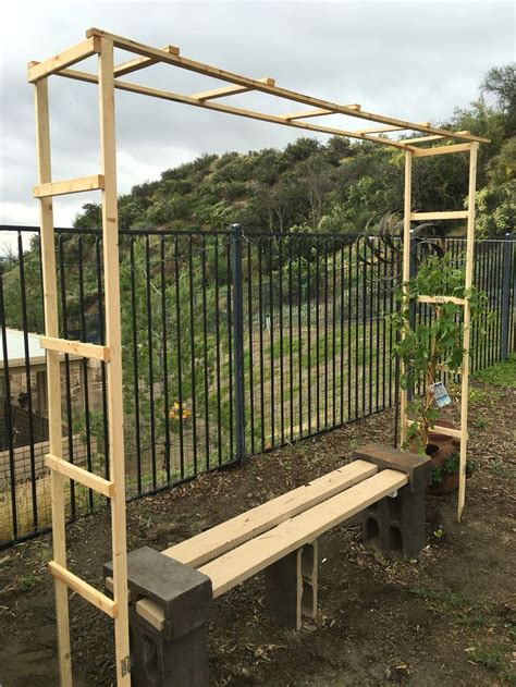 trellis   grape vine simple diy   garden