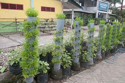 agromedia membangun kebun sayuran mini  teras rumah