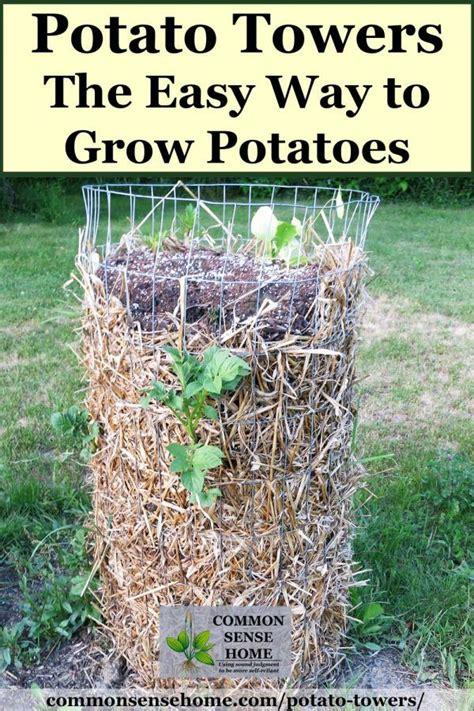 potato towers  varieties  grow  tips