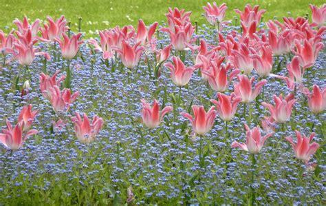 dispatch  metz flowers   jardin du luxembourg