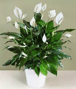 Best Low Light House Plants 10 Best Low Light Houseplants That Are Easy To Grow The