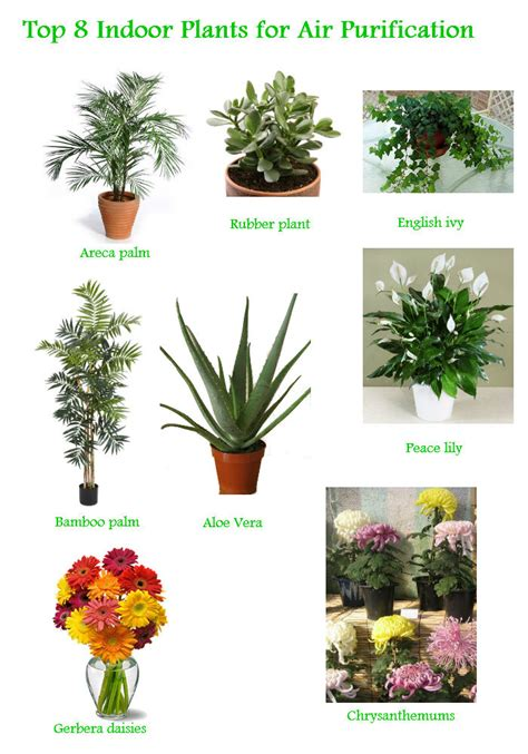 best houseplants for clean air collection of best indoor plants for clean air 10 best