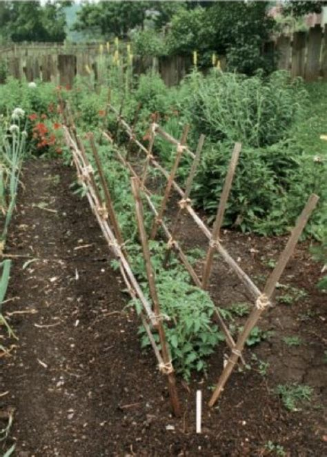 diy tomato support 17 best images about แปลงผ ก on pinterest gardens
