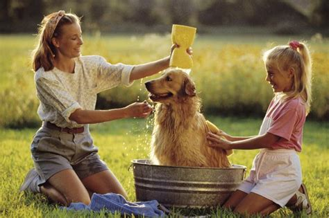 when can i bathe my puppy how to quot deodorize quot my dogs care daily puppy