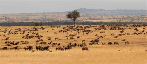 african safari luxury african safari honeymoons africa uncovered