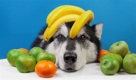 can dogs cherries 6 best fruits dogs can eat and likely must according to science