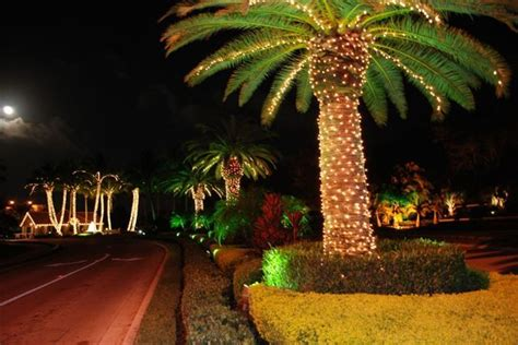 how to string lights on a palm tree real fl palm trees wrapped with led light strings hello