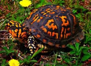 colorful turtles best 10 turtles ideas on turtle sea turtles