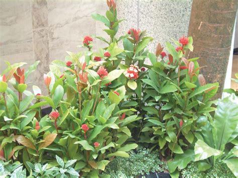 fungsi tanaman hias  desain interior  pandang