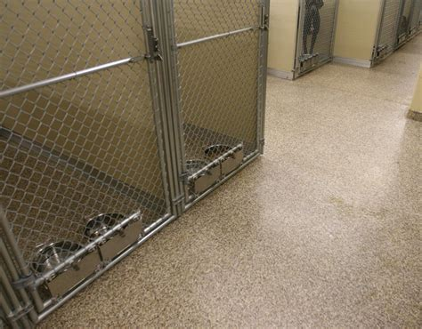 pet shop flooring animal pet shops floorings