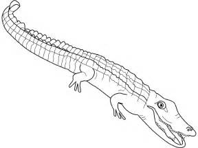 Alligator  Coloring sketch template