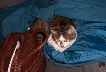 Sabina Cat Food sabrina cat thriftyfun