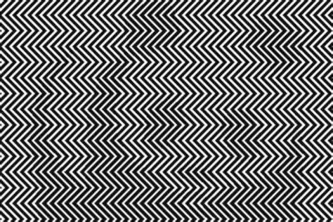 imagenes de encontrar animales ocultos 191 puedes ver el animal oculto en esta ilusi 243 n 243 ptica