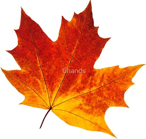 orange maple leaf stickers redbubble