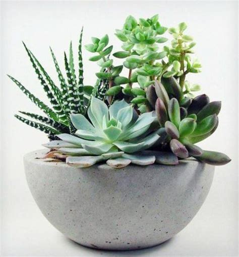 low light succulents houseplants pictures cosy decoration ideas with potted plants fresh design pedia