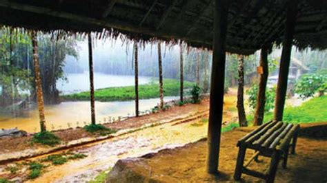 Mamata Mushrooms coorg where daydreams come true news updates