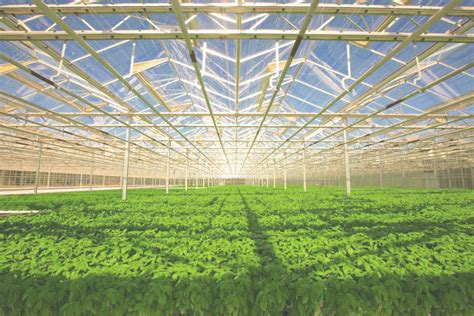 importance  indoor farming  soilhydroponic