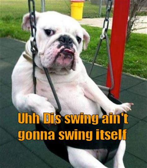 bulldog in a swing bulldog in a swing
