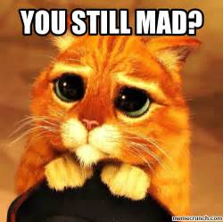 You Still Mad Meme - pics for gt you still mad cat