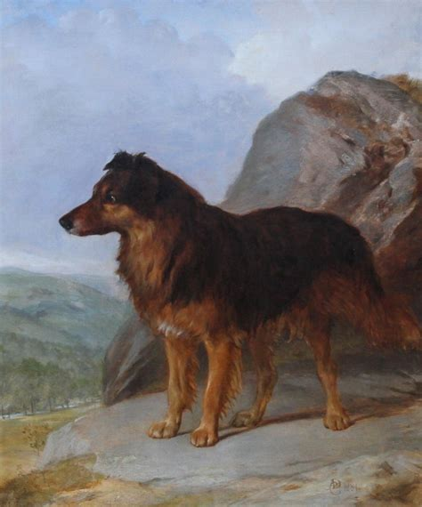 unknown collie dog   landscape thc dog portrait
