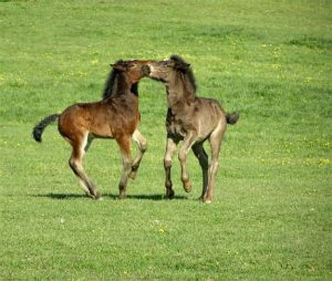 gratis paarden andere kleine paarden foto gratis download