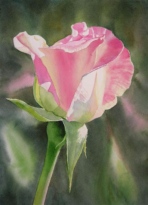 princess diana rose rose paintings sale fine art america rachael edwards