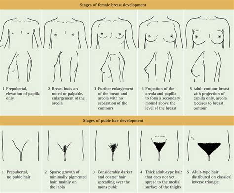 gastroenterology and clinical nutrition growth charts pics of different stages of pubic hair pics of different