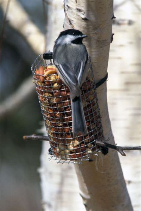 backyard birds omaha backyard bird feeding tips for attracting a variety of