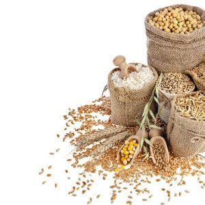 whole grains for dogs 17 tips on how to choose the best food for your