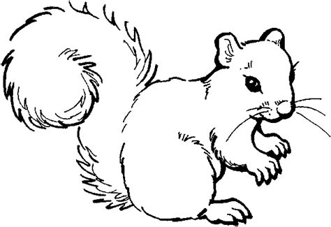 free coloring pages woodland animals cute squirrel coloring page clipart panda free clipart