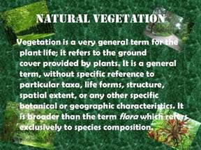 Plant Species In Tropical Rainforest - ppt on natural vegetation and wildlife by gursimran singh