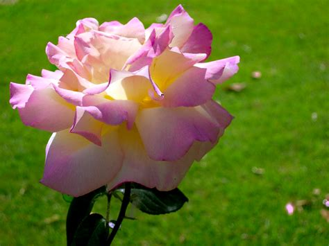 imagenes mas bellas del mundo pin las flores mas hermosas del mundo 5 pelautscom on