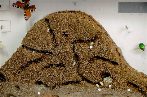 Home Wall Decoration Biology Class Display Anthill