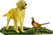 southern golden retriever club southern golden retriever club obedience
