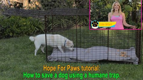 how to get a dog to use the bathroom outside hope for paws lisa arturo tells us how to use a humane