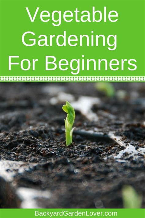 vegetable gardening for beginners everything you need to