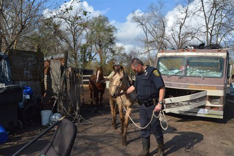 8 neglected horses rescued in acres homes khou