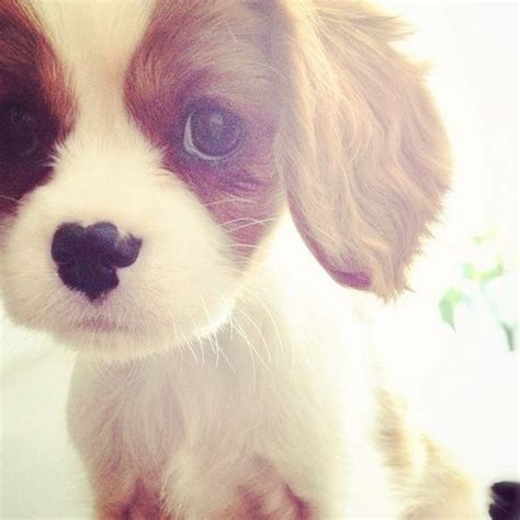 cute puppy pictures   images  facebook