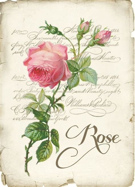 paper roses writer vintage rose digital collage p1022 free for personal use
