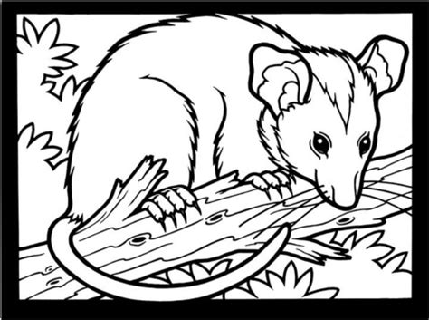 Opossum Coloring Page Supercoloring Com Opossum Coloring Page