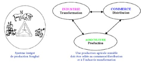 Exemple De Modele De Projet En Pisciculture