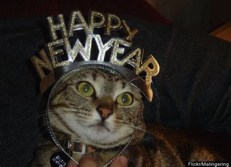 new year animals and what they animals celebrate the new year in style photos