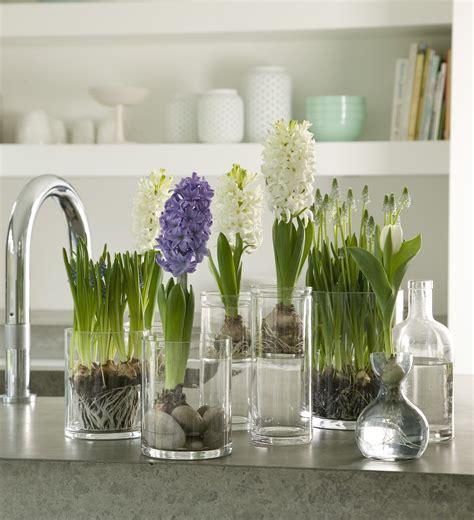 jacinto planta interior mundo ikea el de decoraci 243 n con muebles de ikea