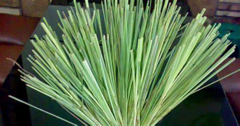 khasiat daun sereh wedange mbah darmo mbah darmo wedang